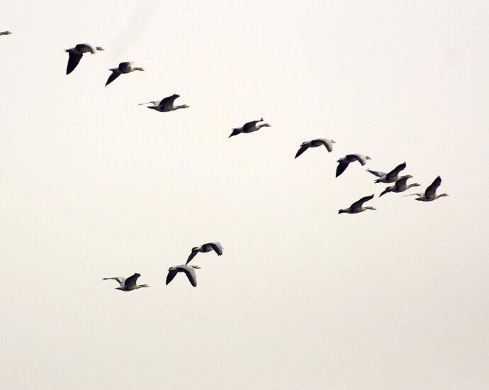 Avian flu brings forth environment, animal and human interactions
