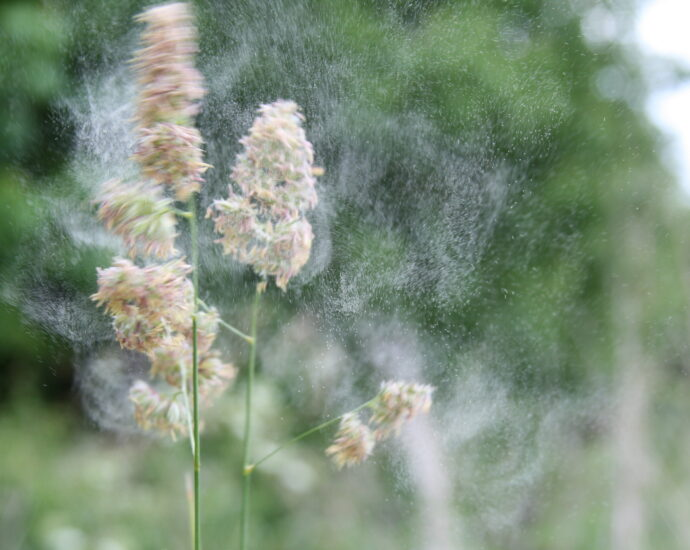 Combining public health and environmental science to develop pollen forecasting
