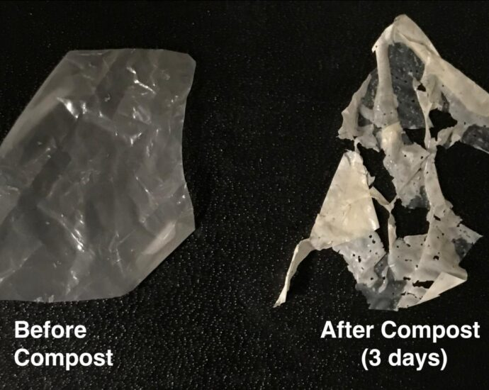 To design truly compostable plastic, scientists take cues from nature