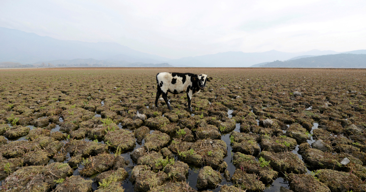 Chile activists eye chance for unmatched environmental protection   Environment News