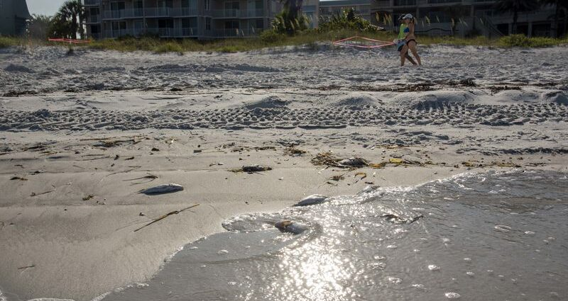 Could Tampa Bay's Red Tide be connected to Piney Point disaster?