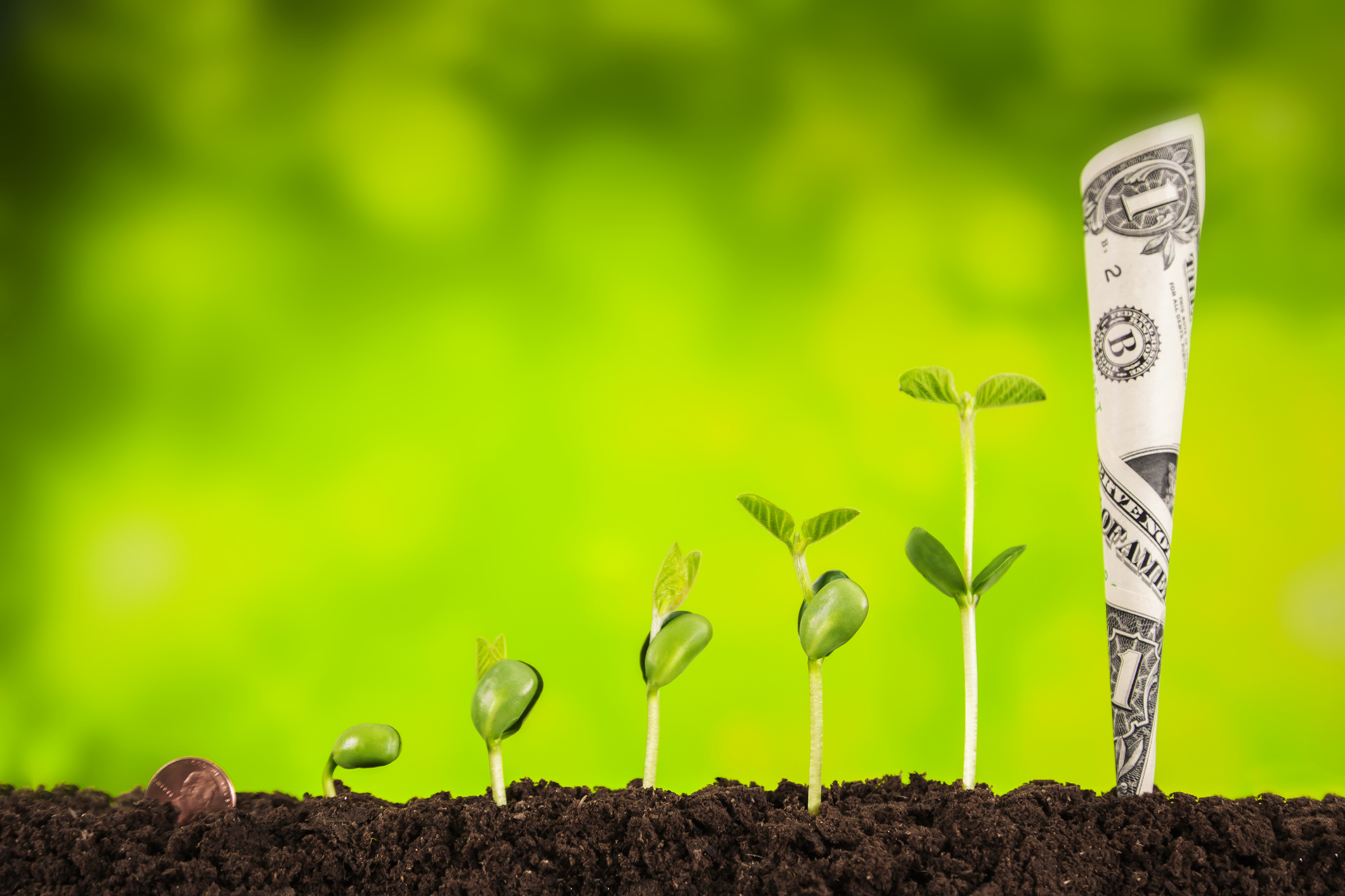 business investment:plant growing on green background