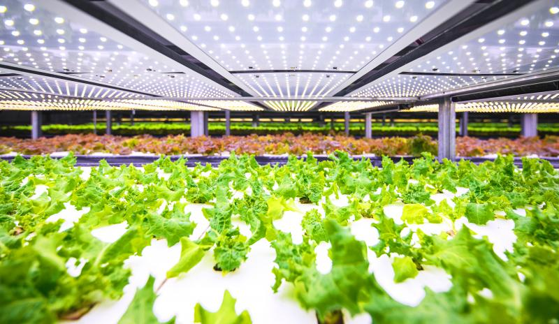 Environmental Impact Assessment: Will vertical farms upend conventional agriculture?
