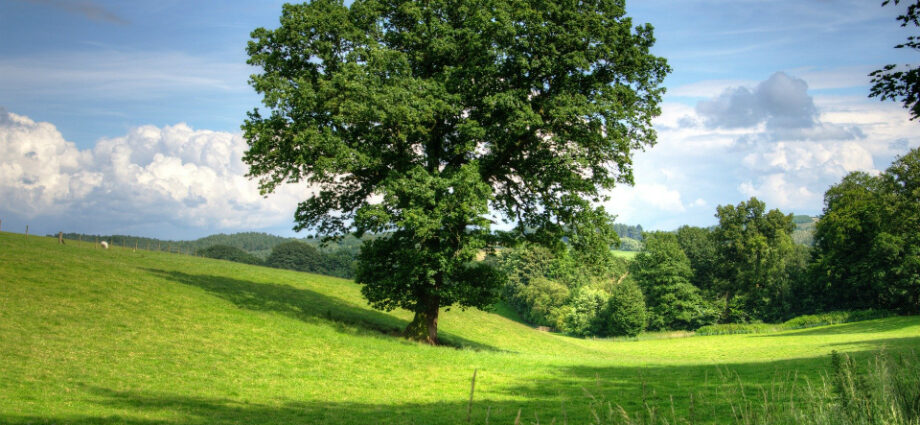 First new board members of Office for Environmental Protection