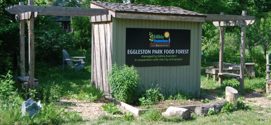 Food Forest Yields Edibles and Environmental Insights
