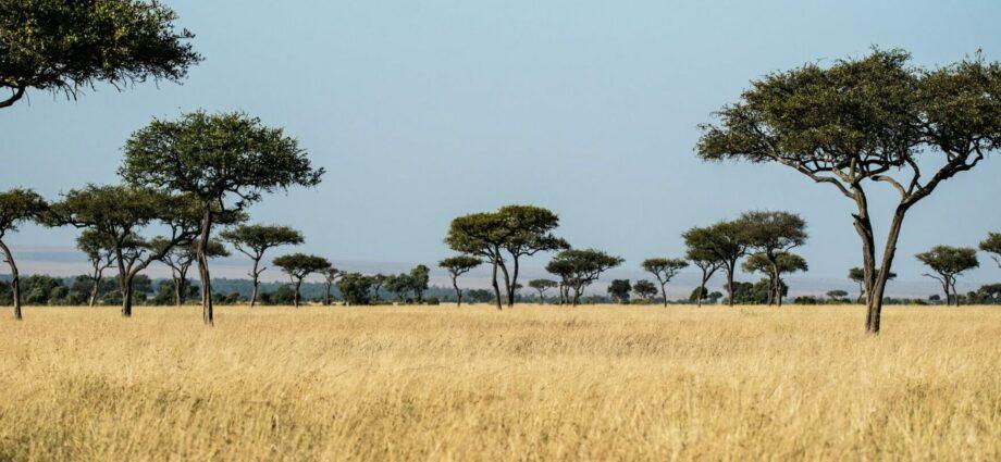In Africa, finance lacks for landscape restoration, despite probable returns