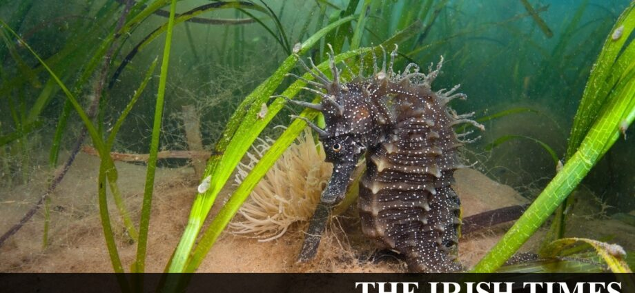 Public called on to log seagrass lawns and meadows
