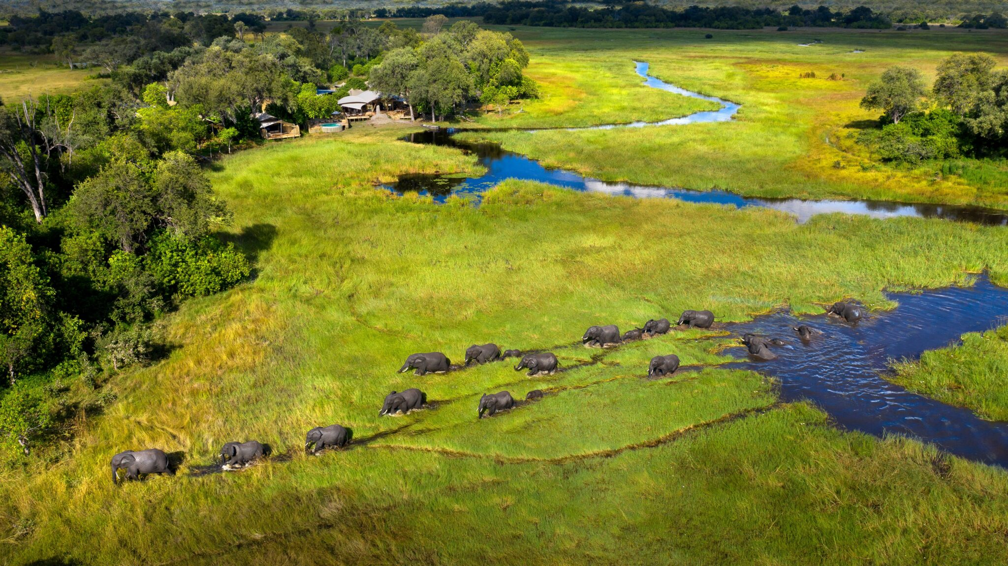 Reclaiming the African Safari with Beks Ndlovu