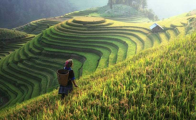 Rethinking Food Systems - Modern Diplomacy