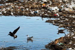 The harm caused by plastic pollution – HS Insider