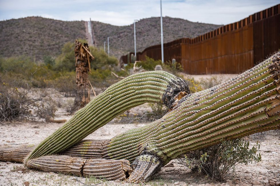 Unfinished border barriers harm environment, National Park Service, Arizona rancher say