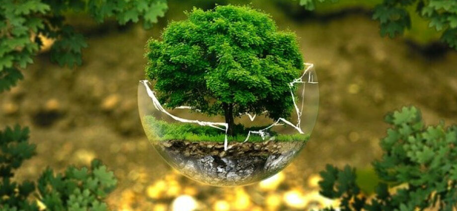 World Environment Day: Tips from business leaders