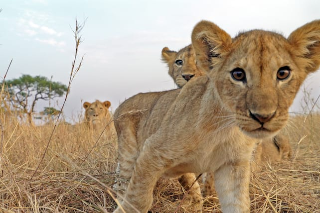 07/12/21: Discovery heads back to the Serengeti