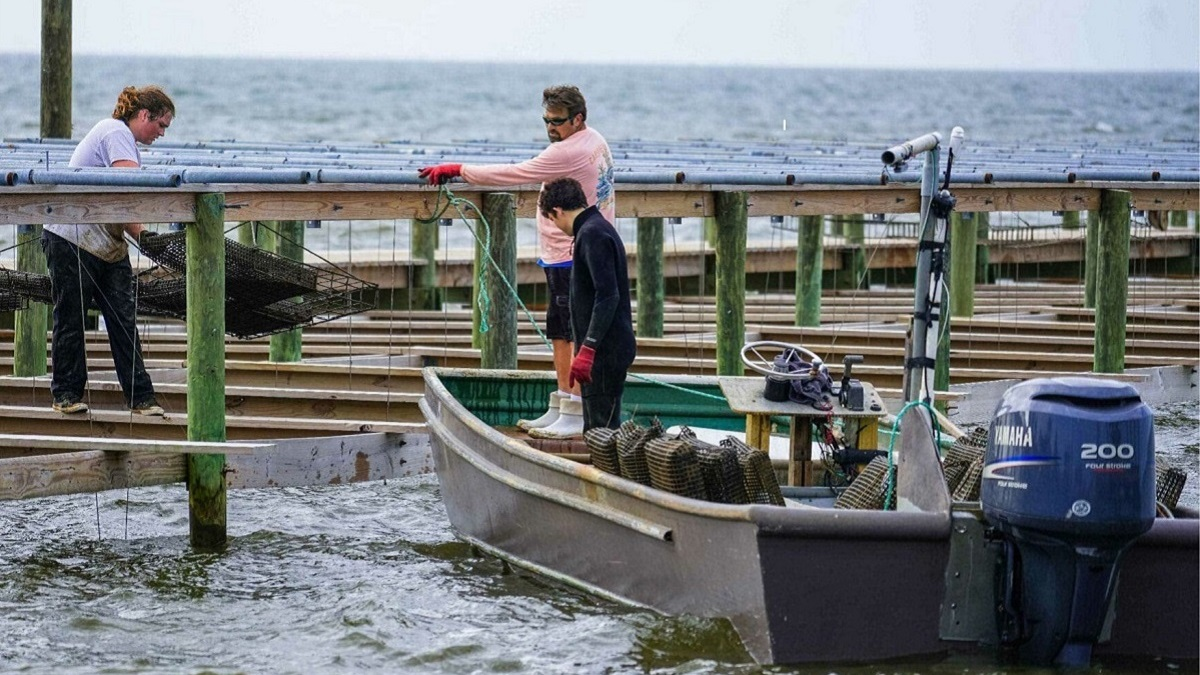 Alabama oyster farmers, environmental interests and researchers meet in the middle with CORE collaboration