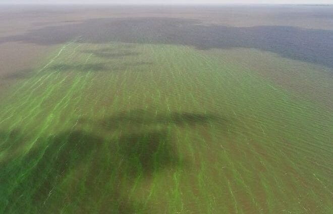 Blue-green algae on Lake Okeechobee can be seen in this aerial image taken on May 3, 2021.