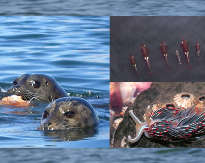 EPA and Environment Canada issue report on health of Salish Sea