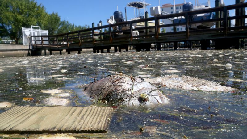 Environmentalists urge DeSantis to declare Red Tide emergency