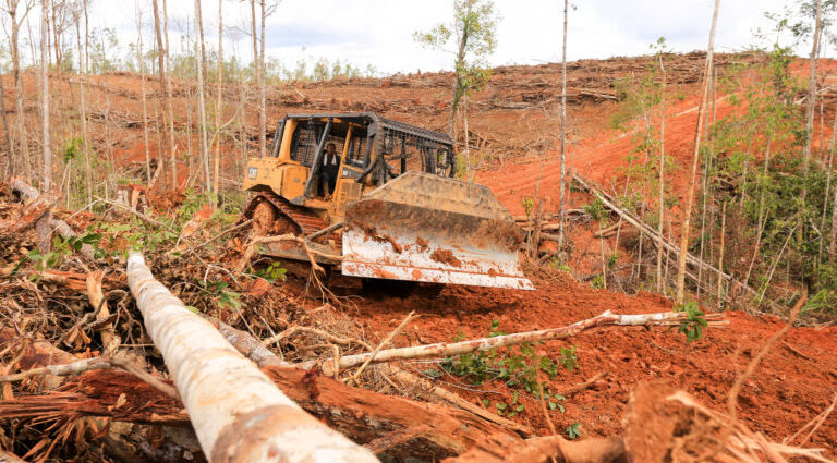 FSC dumps palm oil giant Korindo amid rights, environmental issues in Papua