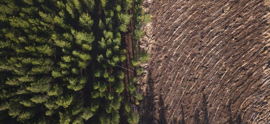 How Sweden's Logging Practices Affect the Environment