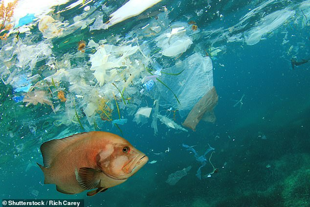 Ambitious plans to stop the completely stop the increase in marine plastic pollution by the year 2050 have been laid out by researchers with the United Nations (stock image)