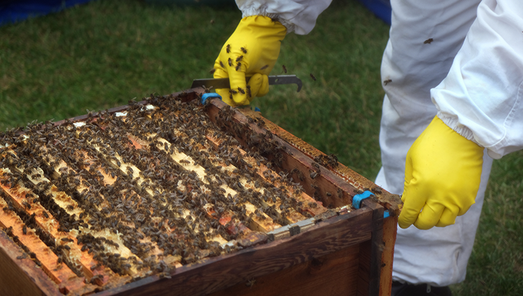 Rapid assessment report to promote sustainable beekeeping in Cambodia