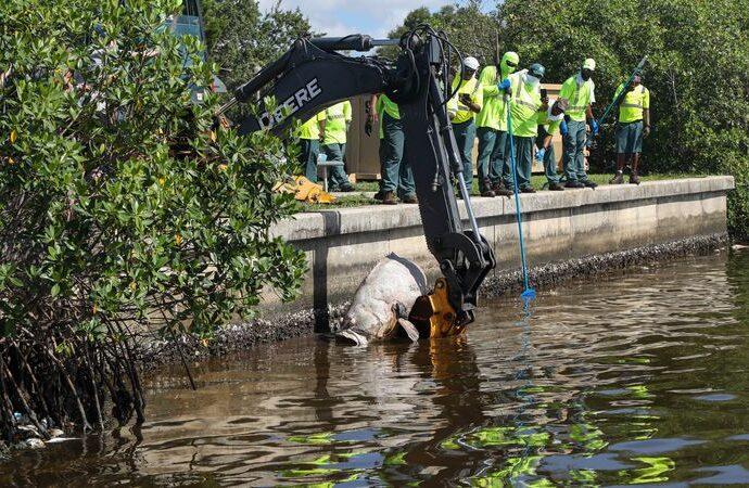 Red Tide costs swell while St. Petersburg mayor, Gov. DeSantis bicker