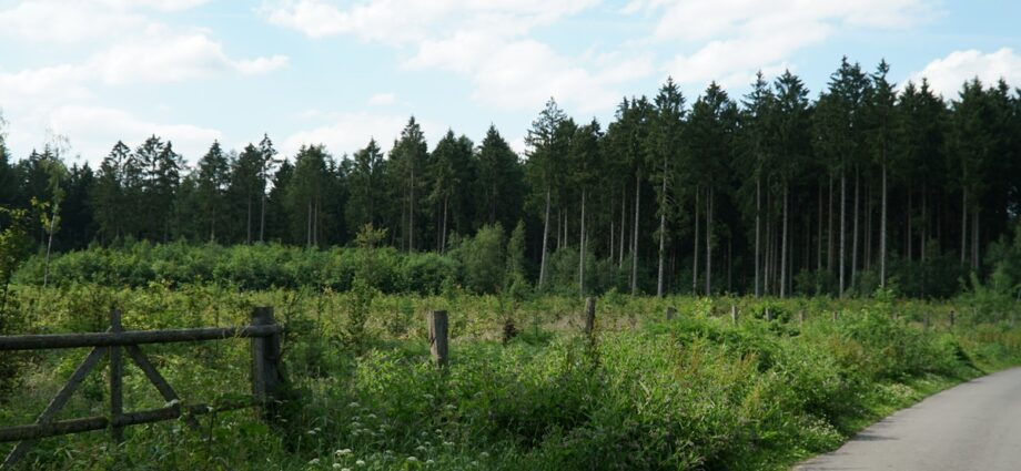 Tree invasions can do more harm than good when it comes to carbon capture | News | Eco-Business