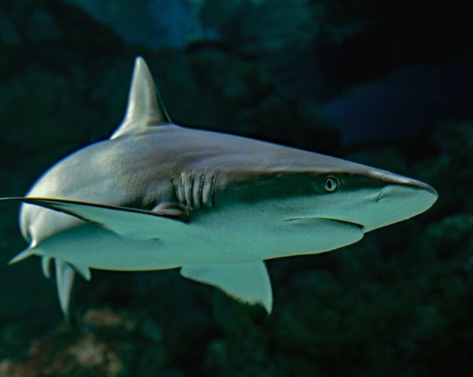 Why sharks matter to ocean ecosystems: an expert explains – The European Sting - Critical News & Insights on European Politics, Economy, Foreign Affairs, Business & Technology