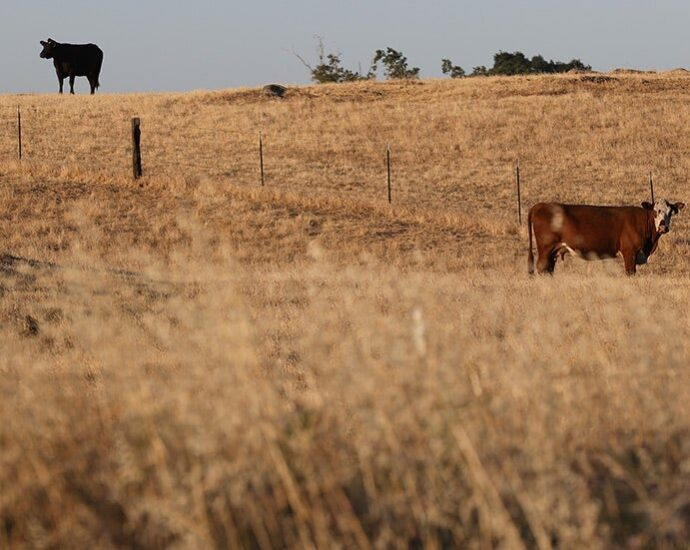 Democrats face big decision on agriculture in climate change fight