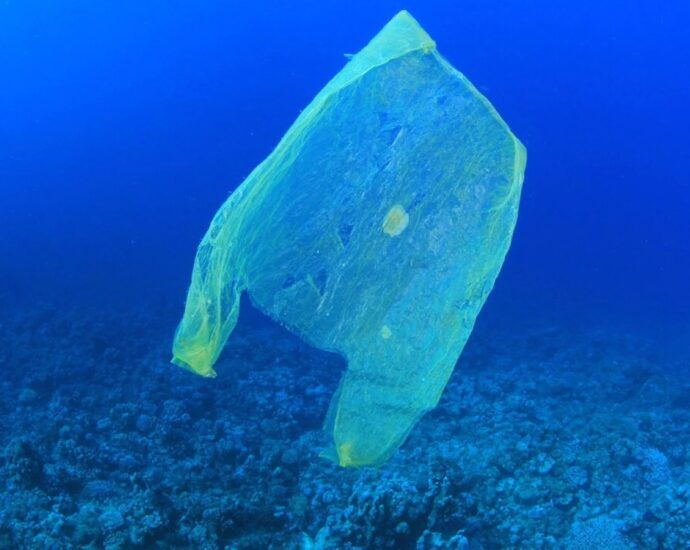 Migratory species most vulnerable to plastic pollution, finds UN report
