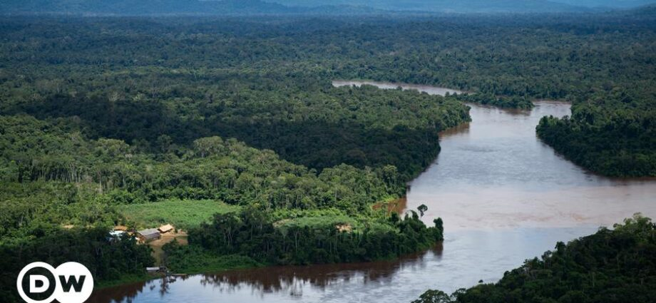 Brazil: Who can still save the world′s green lung?   Environment   All topics from climate change to conservation   DW