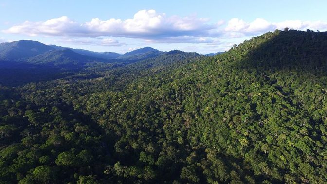 Brazil's Atlantic Forests are naturally regenerating much faster than expected