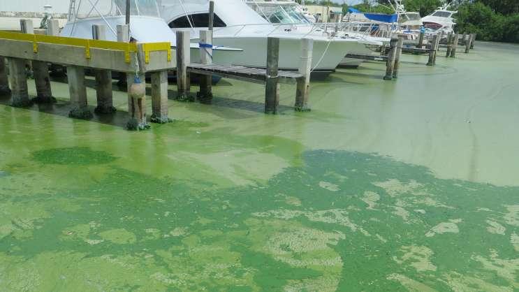 Environmental Oversight Improves Under DeSantis, But Enforcement Issues Remain - Central Florida News - Environment