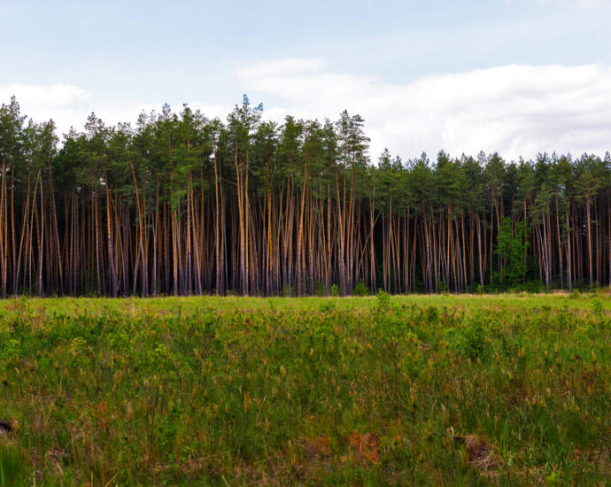 Five ways to ensure your forest carbon offsets aren't just corporate greenwash