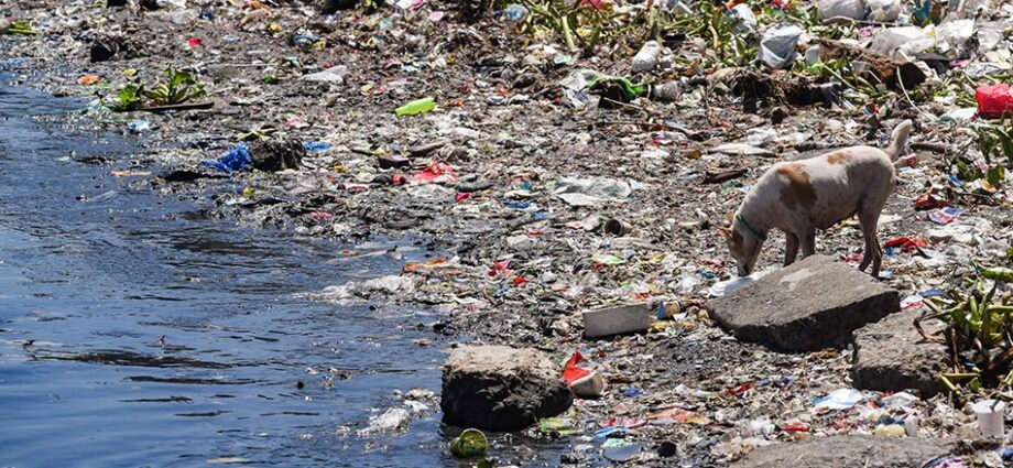 A stray dog scavenges for food among trash near the mouth of Pasig river that connects it to Manila Bay in Baseco Compound in Tondo, Manila on World Environment Day, June 5, 2021.