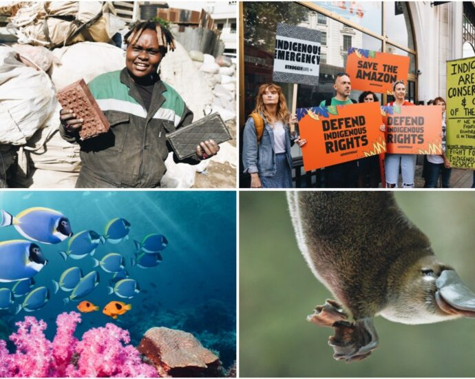 Plastic Pollution Solutions, a Platypus Renaissance, and More Good Climate News