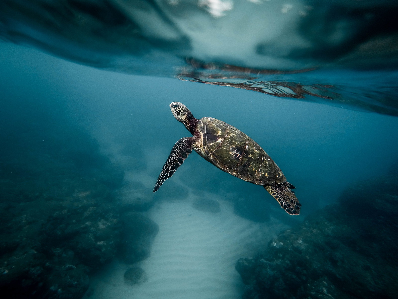 Ingested Plastic Causes Buoyancy Issues in Some Sea Turtles