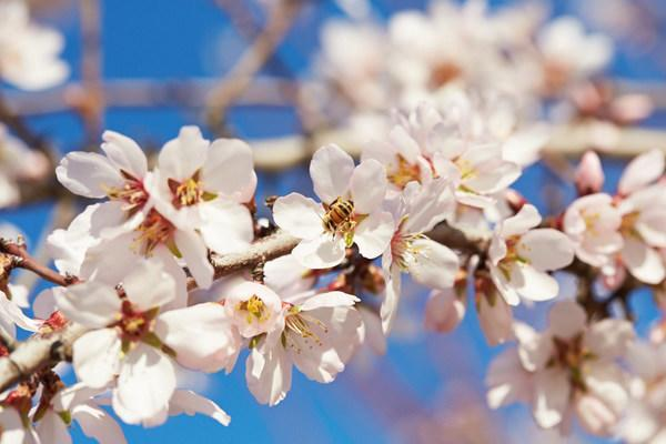 North American Pollinator Protection Campaign Honors Almond Farmers of California