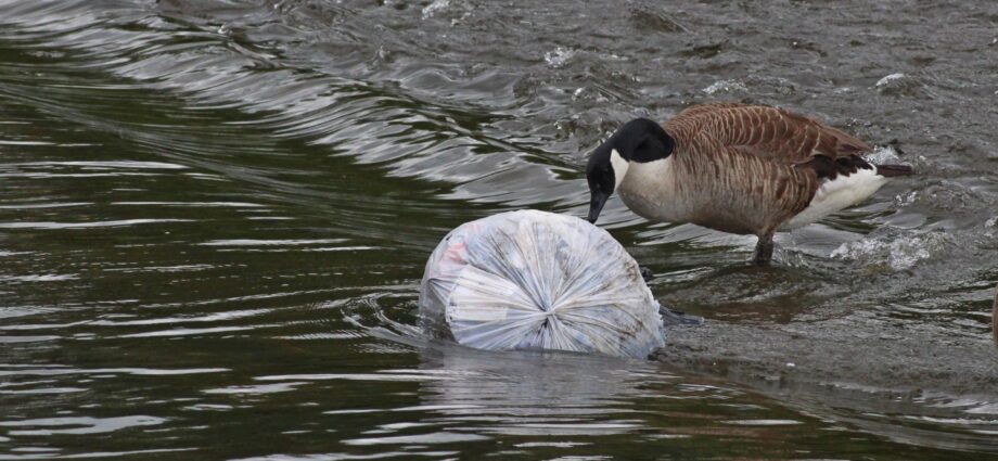 The migratory routes of plastic